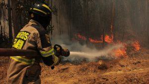 Incendio forestal que afecta al Parque Nacional Radal Siete Tazas lleva cuatro mil hectáreas consumidas