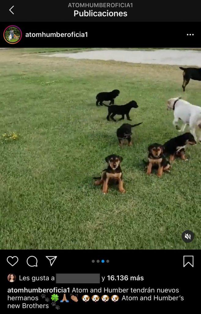 Nuevos perros Alexis