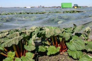 Los cultivos europeos en riesgo por la ausencia de trabajadores migrantes por Covid-19