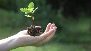 Ministerio del Medio Ambiente lanzó campaña para cuidar el planeta desde la casa