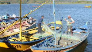 Informe revelómejora en la actividad pesquera de los recursos jurel y bacalao