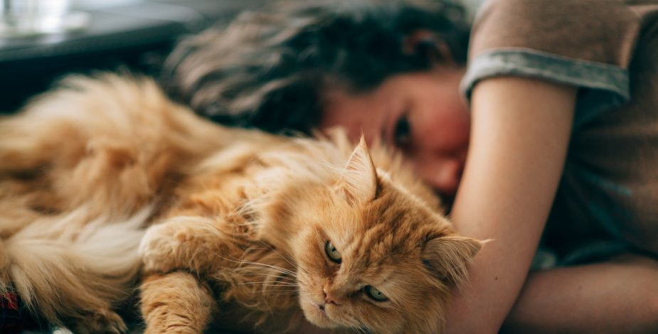 OMS: Gatos pueden contagiarse de Coronavirus, pero no traspasarlo a humanos