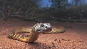 Hombre falleció luego de ser mordido por una de sus 25 serpientes en España