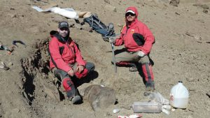 Científicos descubren fósil de tortuga de agua dulce que habitó en Chile hace 75 millones de años