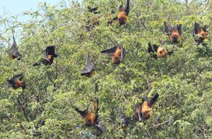 Científicos descubren cientos de nuevos coronavirus en los murciélagos de China