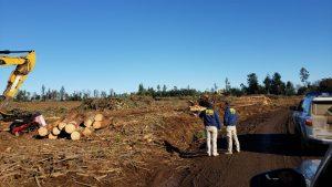 Encapuchados quemaron siete máquinas en fundo forestal en Mulchén