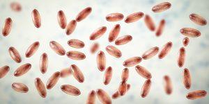 Ciudad china emitió alerta sanitaria por posible caso de peste bubónica