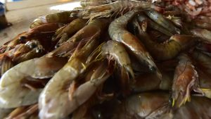 China suspendió importación de camarones ecuatorianos tras detectar Covid-19 en paquetes del producto