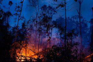 El Amazonas registró el mayor número de focos de incendio en los últimos 13 años