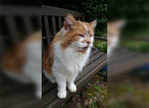 Murió el considerado gato más viejo del mundo: Tenía 31 años