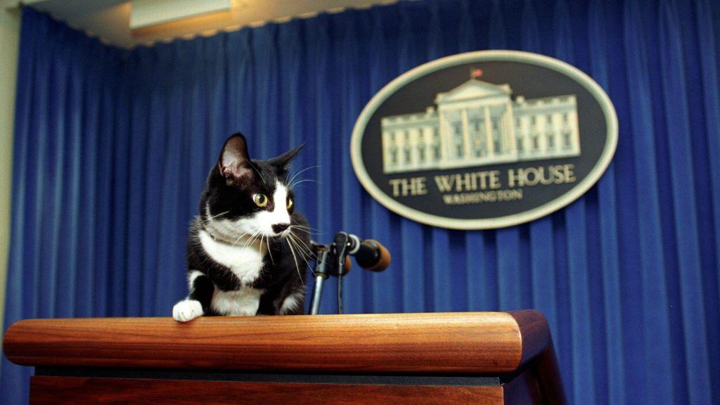 ¿Por qué se celebra el Día del Gato? Famosos y tuiteros tributaron a sus amigos felinos