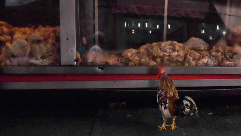 China detectó el coronavirus del Covid-19 en pollo congelado proveniente de Brasil
