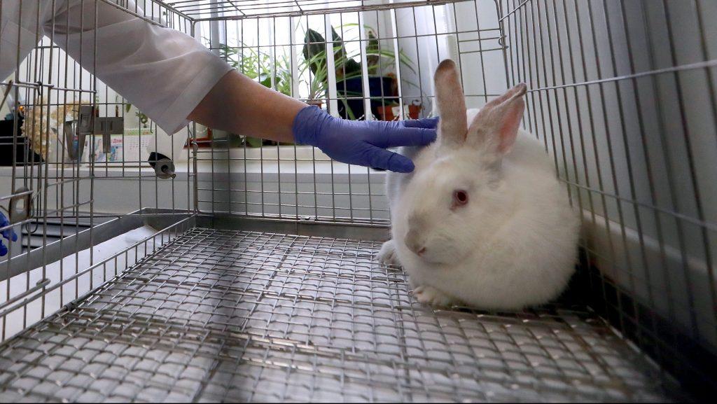 Colombia es el primer país de Sudamérica en prohibir las pruebas de cosméticos en animales