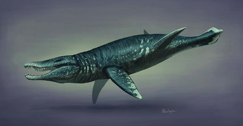 Desierto de Atacama: Descubren fósiles de uno de los mayores depredadores marinos de la época jurásica