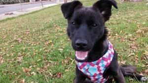 """""""Por favor, adóptenla"""": Beli, la perrita chilena que nadie ha querido por su apariencia"""