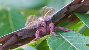 """¿Qué son realmente las """"tarántulas con alas""""?: La especie voladora que aterra en México y EE.UU."""