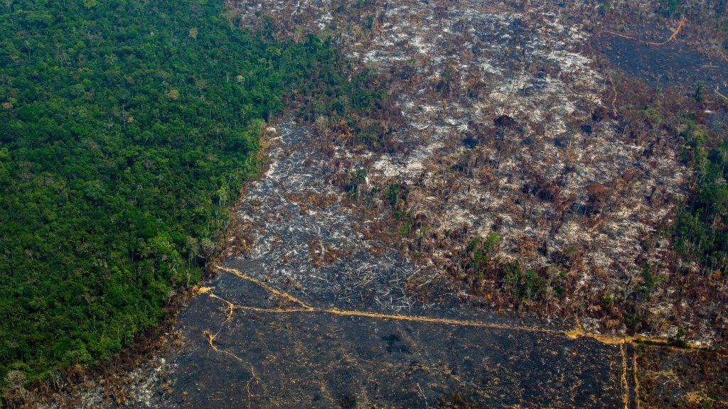 Deforestación en la Amazonia tuvo alza de 9,5% y alcanzó cifra récord en 12 años