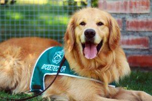 Autoridades presentaron a la primera brigada de perros biodetectores de Covid-19