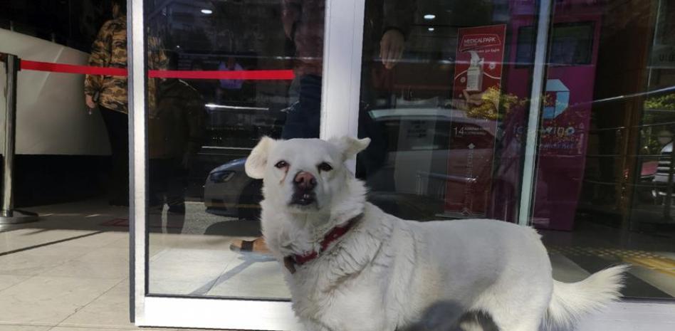 Boncuk y Semal: La historia de la perrita que esperó a su dueño fuera del hospital durante siete días