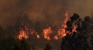 Presidente Piñera anunció querellas criminales contra quienes resulten responsables por incendios forestales en la Región de Valparaíso