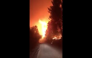 Al menos 12 viviendas fueron evacuadas en Nacimiento por incendio forestal: Onemi decretó alerta roja en la zona