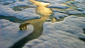 Foro Económico Mundial declaró al 2020 como uno de los años más calurosos de la historia y uno de los más devastadores para el cambio climático