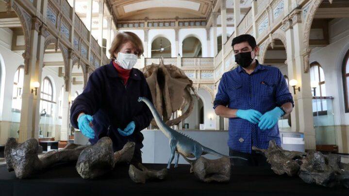 """Paleontólogo chileno aseguró que recursos destinados a la ciencia """"no son suficientes"""": """"Esperamos que eso vaya mejorando porque tenemos mucho potencial"""""""
