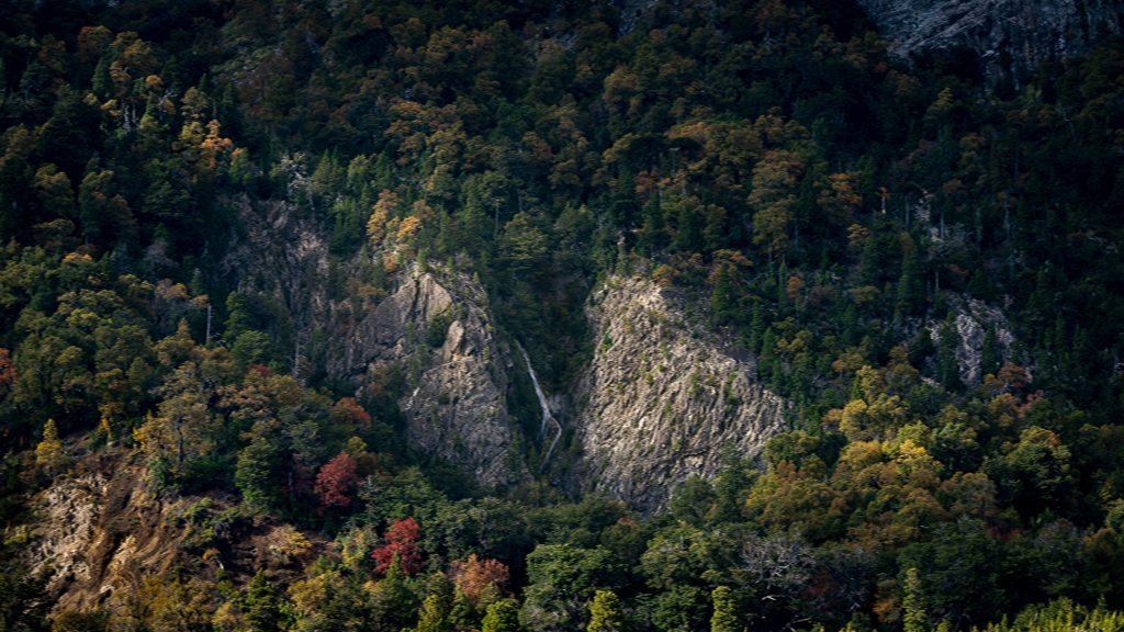 Una cámara que cuenta las hojas de los árboles: la apuesta de Odd Industries y Arauco para revalorizar los bosques nativos