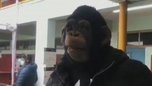 """""""El mono tiene que venir a arreglar esto"""": Elector acudió a votar con curiosa máscara"""