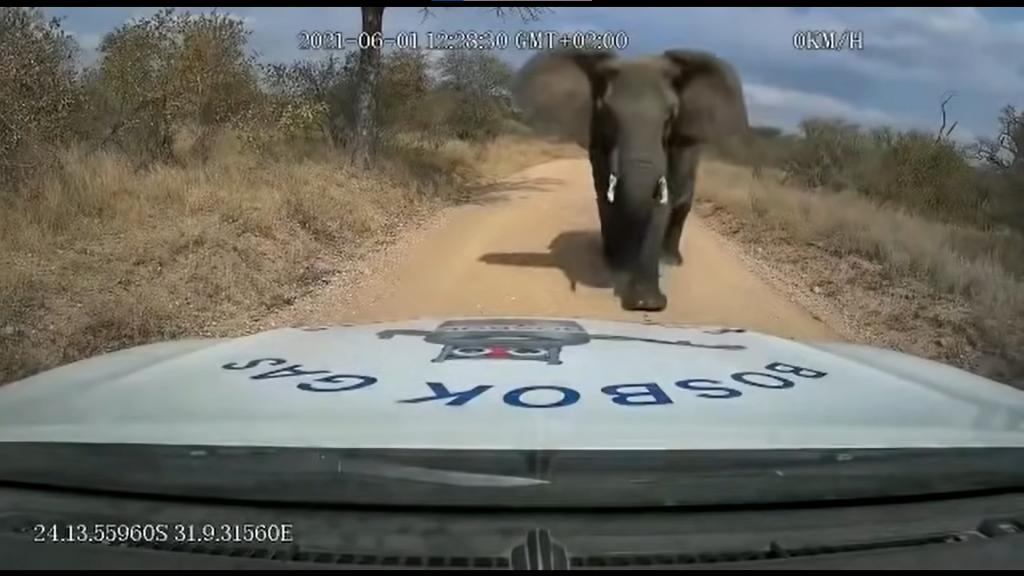 """Elefante """"atacó"""" a repartidor de gas en Sudáfrica"""