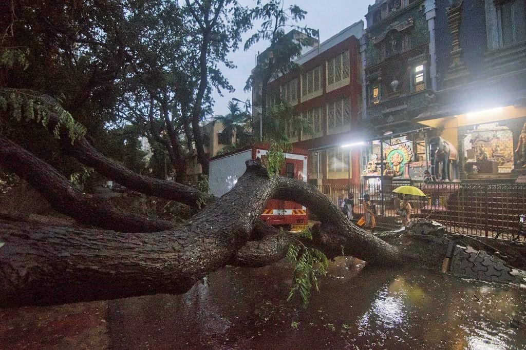 Un árbol colapsó en medio de la calle en Bombay