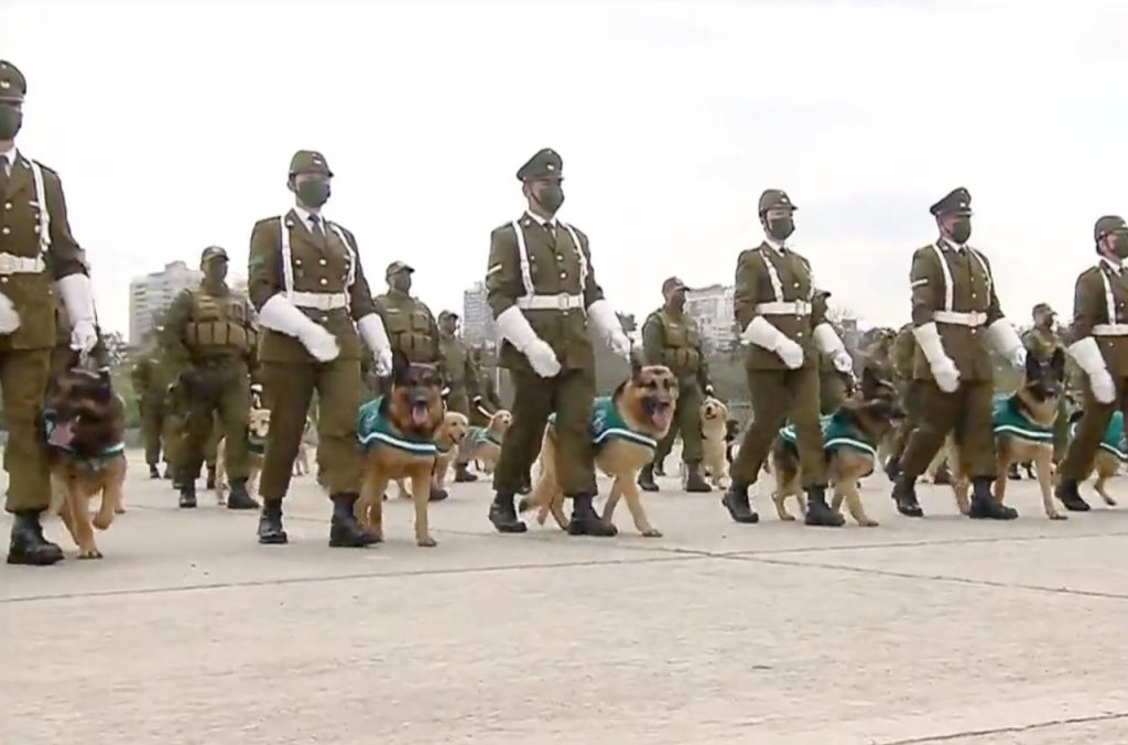 """Perro """"rebelde"""" de Carabineros se robó la atención en la Parada Militar"""