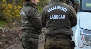 Reportan una persona herida durante el intento de robo en la Provincia de Arauco